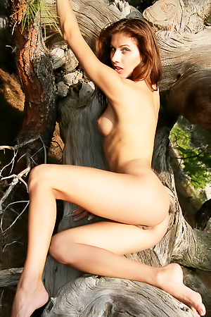 Naked cutie takes sexy positions on a tree.